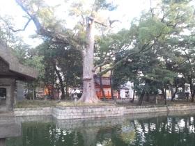 小川沿いの巨木